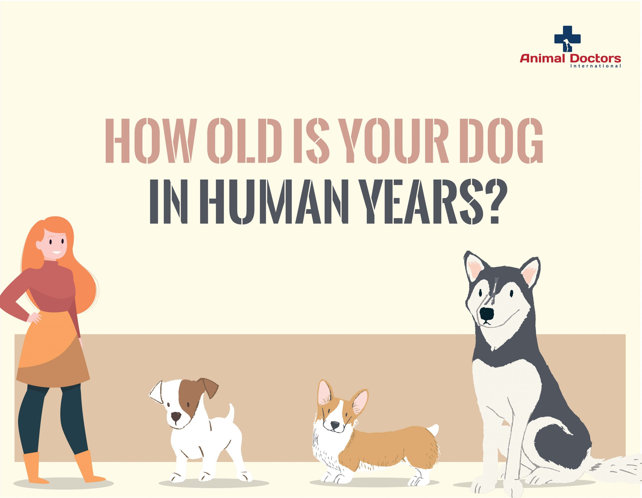 How Old Is Your Dog in Human Years?